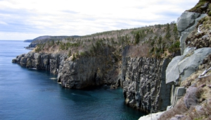 Newfoundland 4k