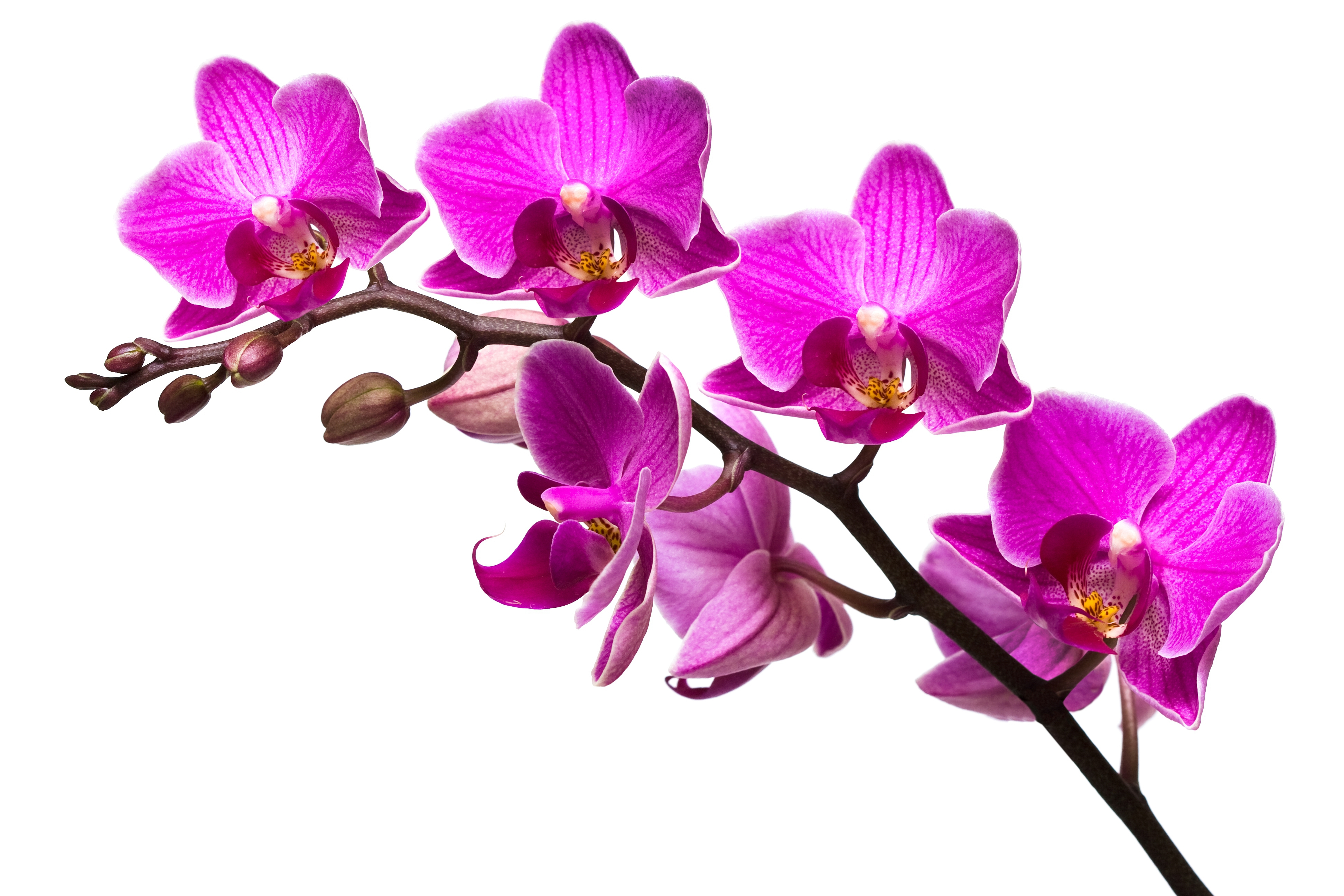 Orchid wallpapers images photos pictures backgrounds - White orchid flowers desktop wallpapers ...