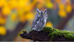 Owl Photos