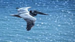 Pelican 4k