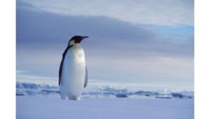 Penguin Background
