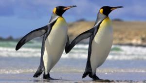Penguin Desktop