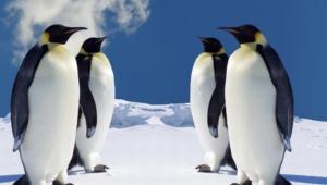 Penguin Hd