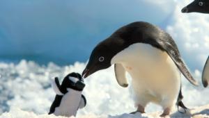 Penguin High Definition
