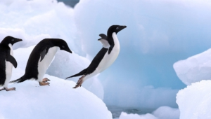 Penguin Wallpapers Hq