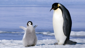Penguin Wallpapers And Backgrounds