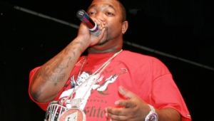 Pictures Of Gorilla Zoe