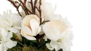 Pictures Of Magnolia