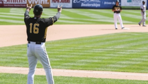 Pictures Of Salt Lake Bees
