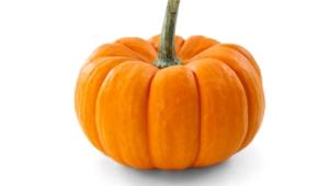 Pumpkin 4k