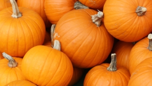 Pumpkin Hd Wallpaper