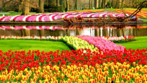 River Of Flowers Keukenhof Hd Wallpaper