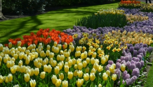 River Of Flowers Keukenhof High Definition Wallpapers