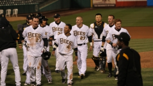 Salt Lake Bees Wallpapers
