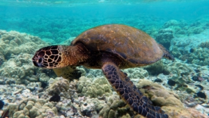 Sea Turtle High Quality Wallpapers