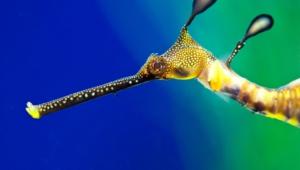 Seahorse Desktop