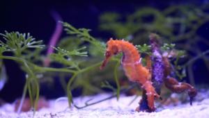Seahorse Photos