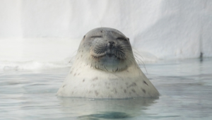 Seal Free Download