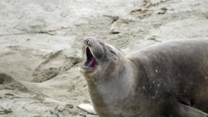 Seal Hq