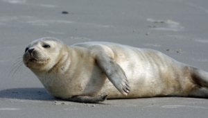 Seal High Definition
