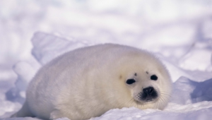 Seal Images