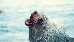 Seal Pics