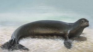 Seal For Desktop