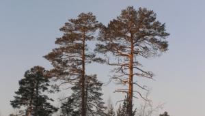 Siberian Wallpapers Hd