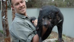 Tasmanian Devil Pictures