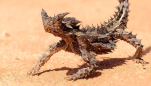 Thorny Devil Full Hd