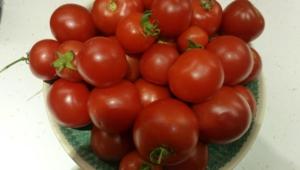 Tomato Desktop