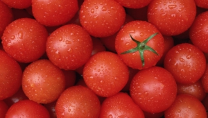 Tomato Wallpaper For Laptop