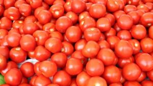 Tomato For Desktop Background