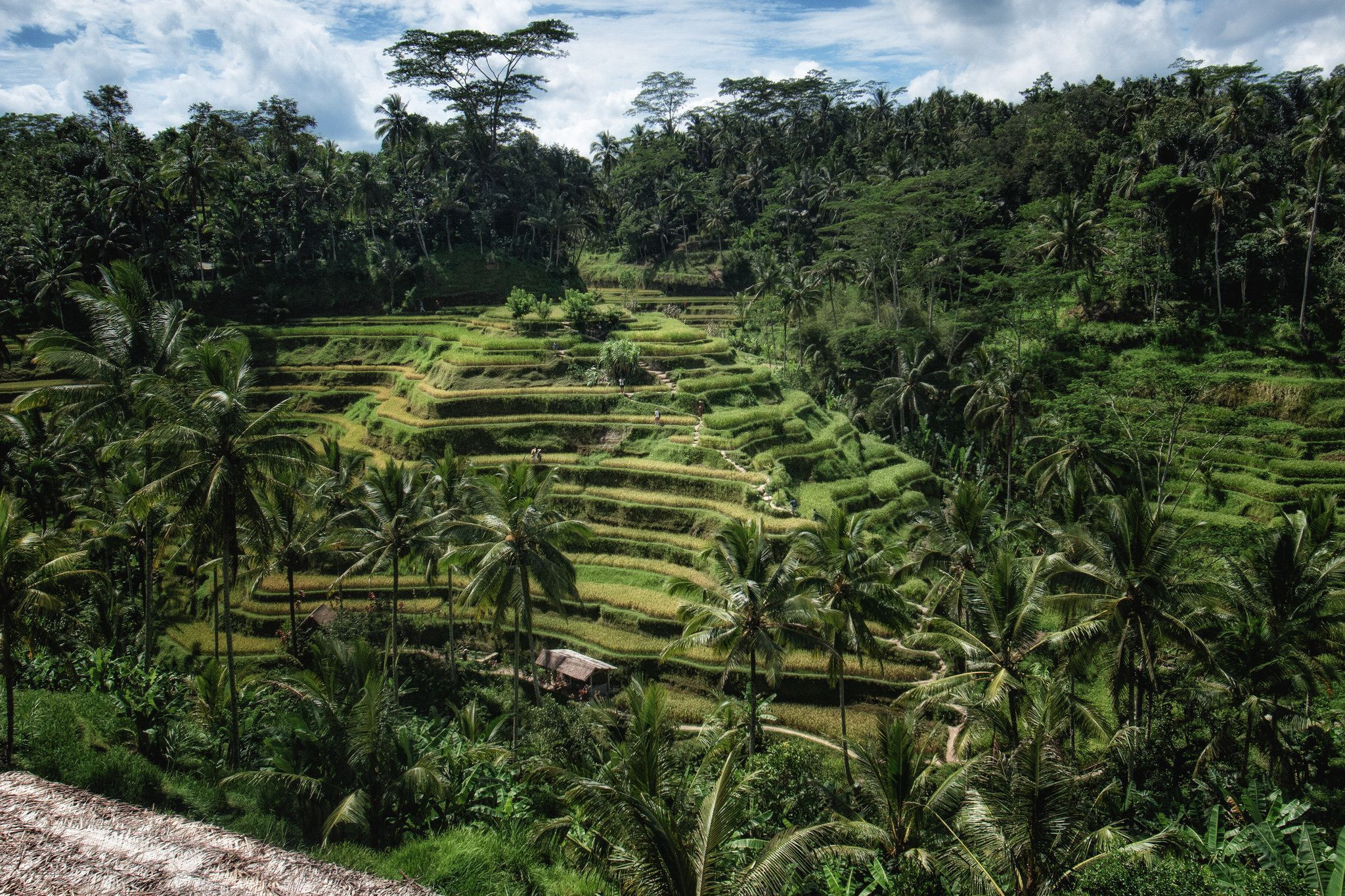 Ubud Full Hd