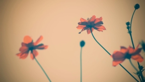 Vintage Flowers Wallpapers And Backgrounds
