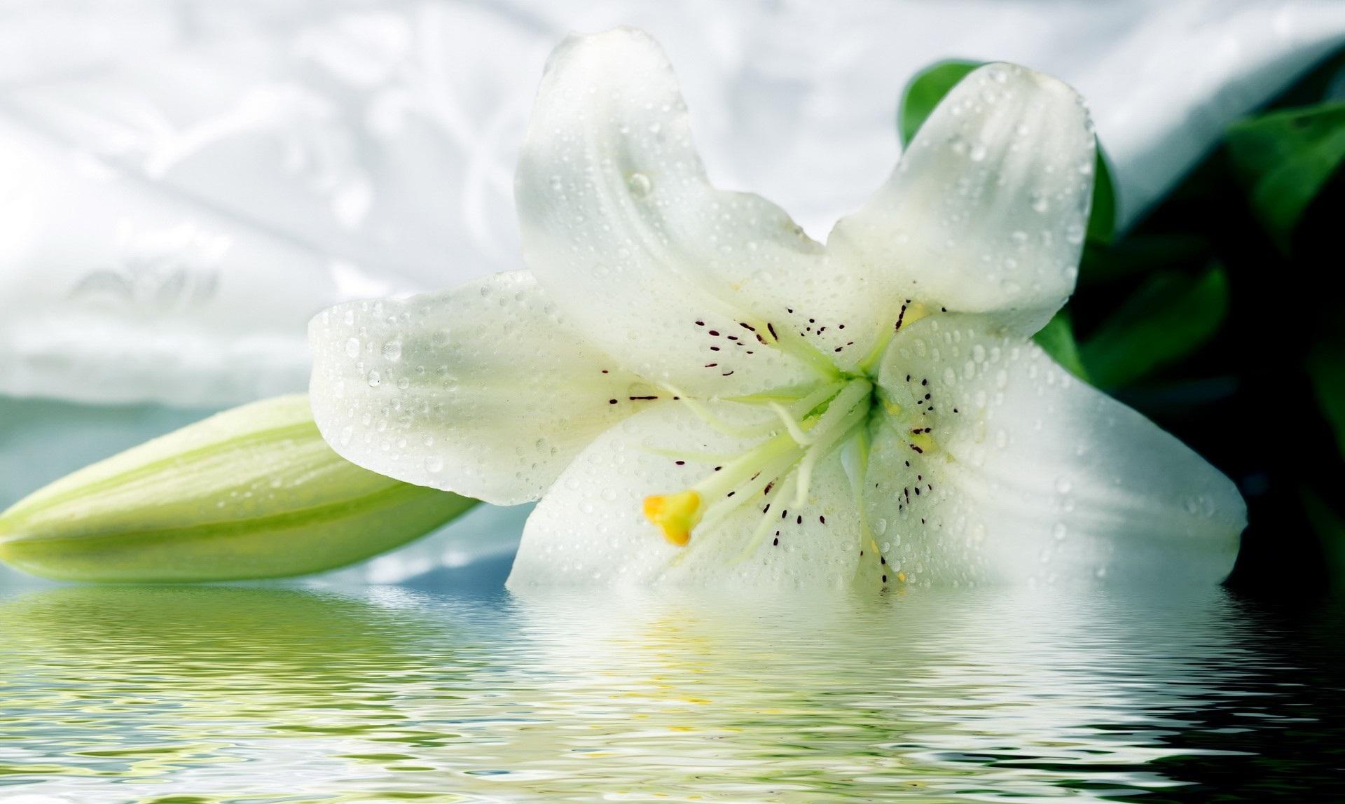 White Flowers wallpaper x