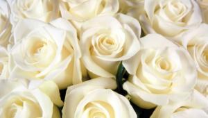 White Rose 4k