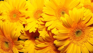 Yellow Flowers 4k