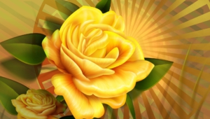 Yellow Rose Wallpapers And Backgrounds