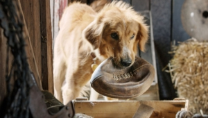 A Dog's Purpose High Definition Wallpapers