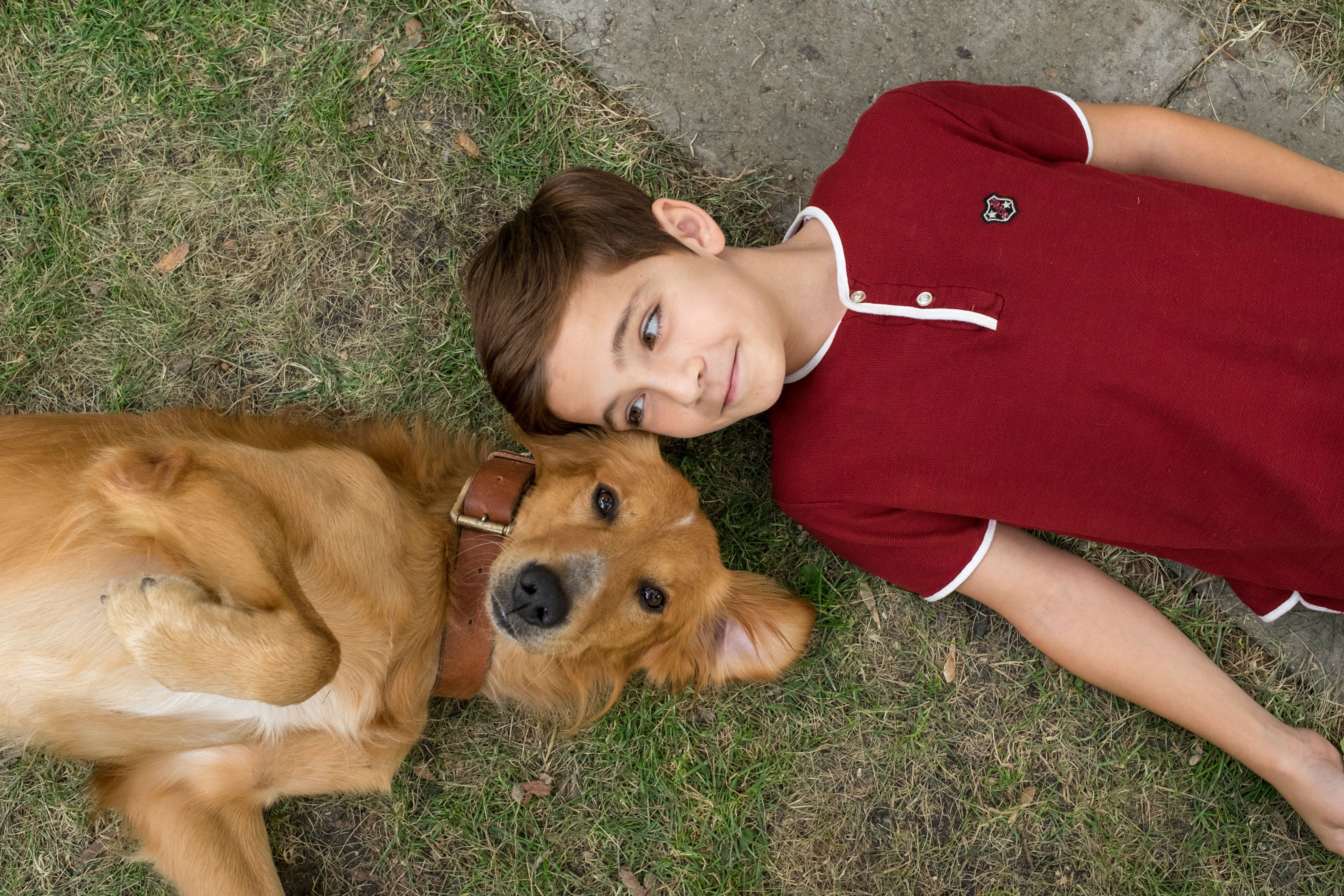 A Dog's Purpose Pictures
