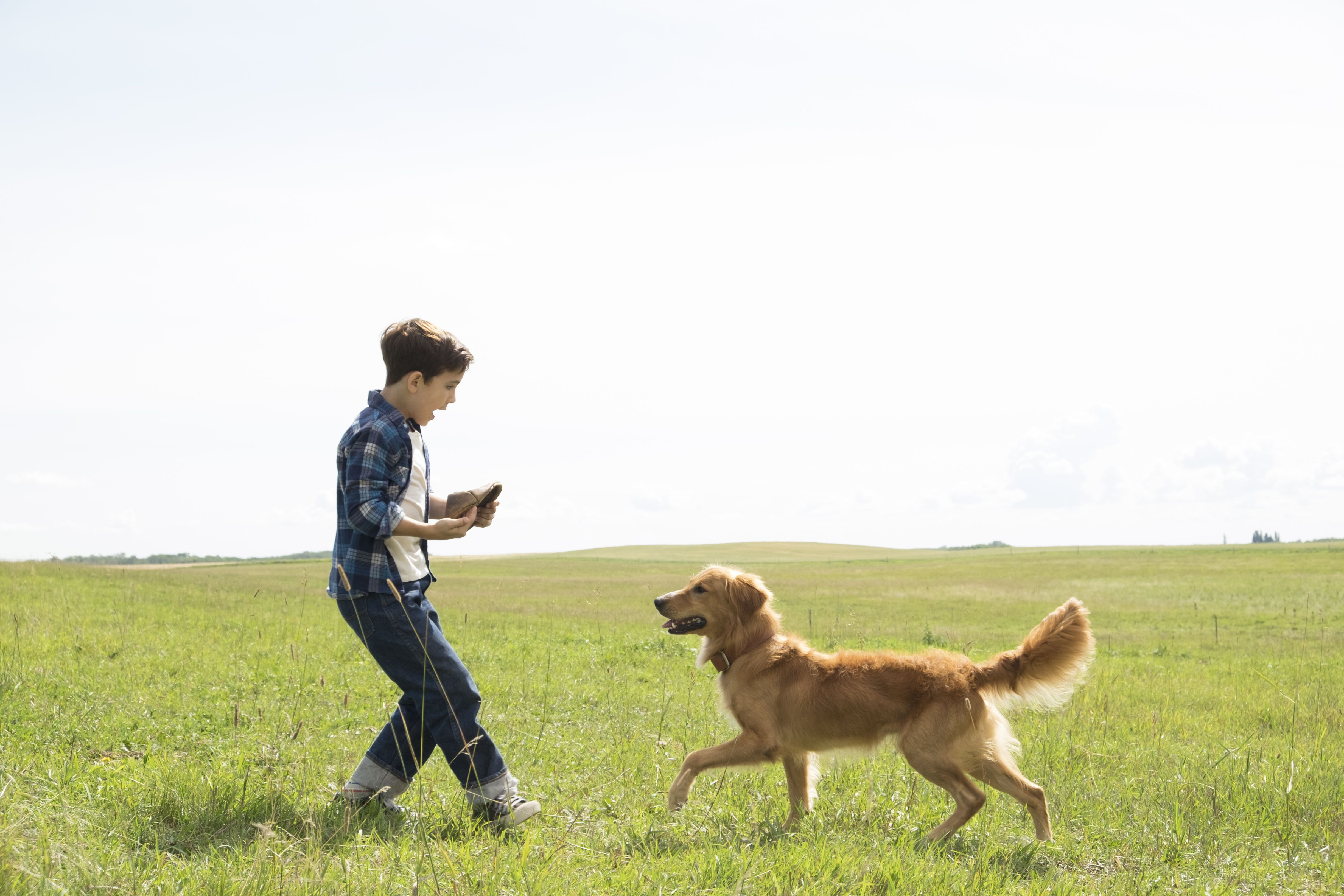 Where Can I View A Dog S Purpose