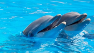 Bottlenose Dolphins High Definition Wallpapers