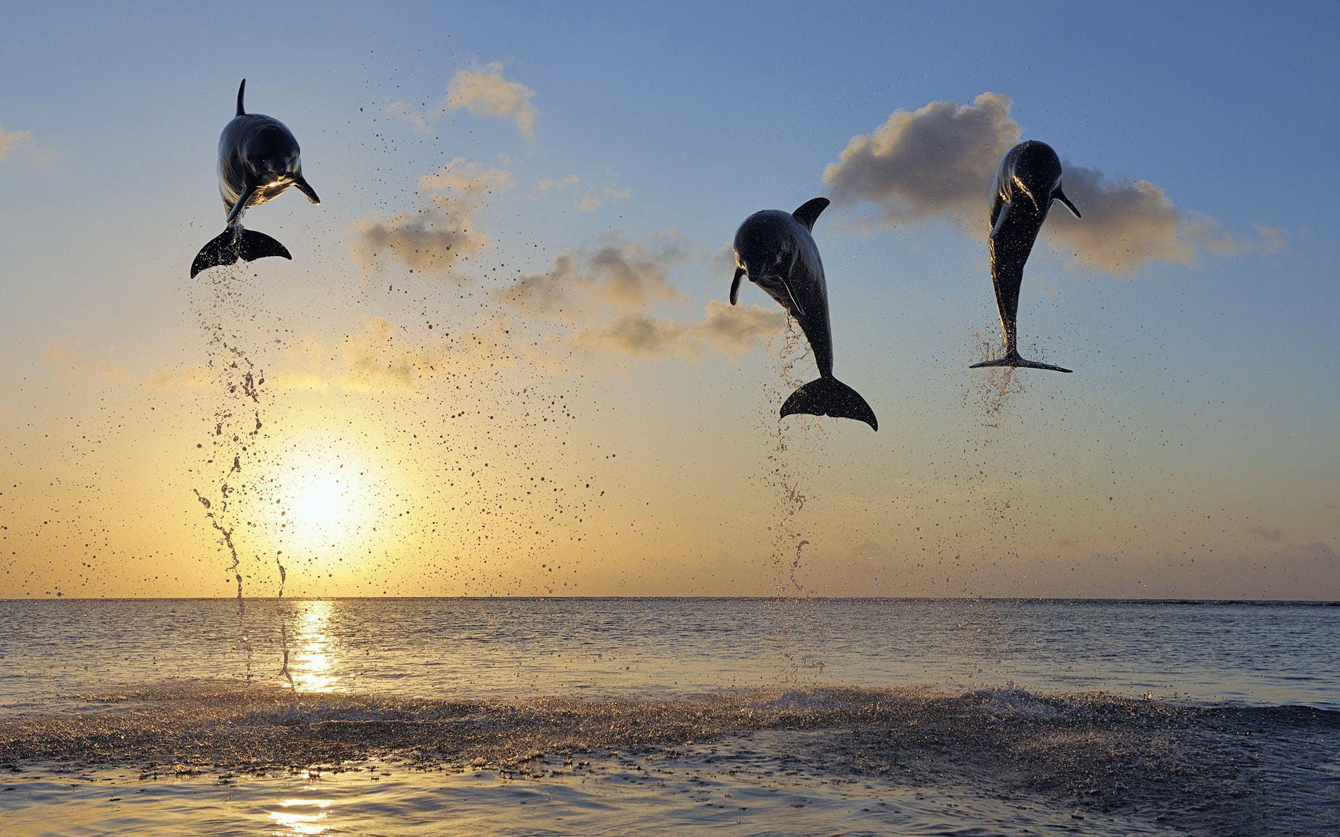 Bottlenose Dolphins Images