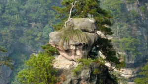 Tianzi Mountain Photos