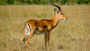 Antelope Images