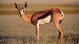 Antelope Photos