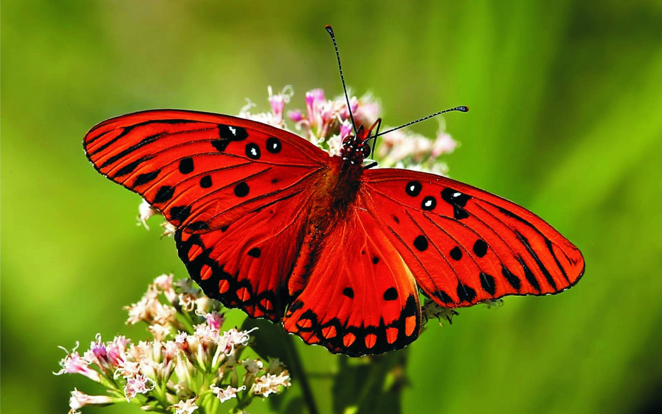 Butterfly HD Background