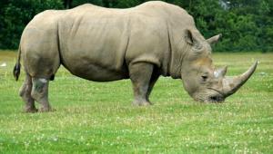 Rhinoceros Desktop For Iphone