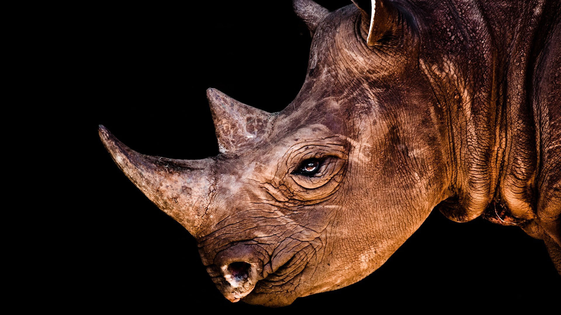 Rhinoceros Iphone Wallpapers
